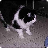 Adopt A Pet :: Abbey - Toronto, ON