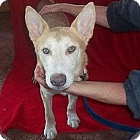 Adopt A Pet :: TEX - Sardis, TN