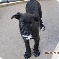 Adopt A Pet :: RINGO - Brookside, NJ