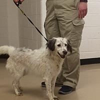 Adopt A Pet :: TN/Snowy - Walton, KY