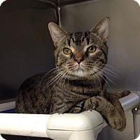 Adopt A Pet :: B-1 Shadow - Triadelphia, WV