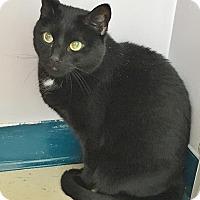 Adopt A Pet :: Dory - Salisbury, MA