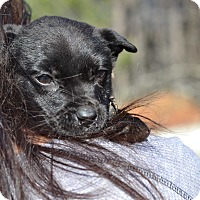Adopt A Pet :: Aimee Caitlin - Acworth, GA