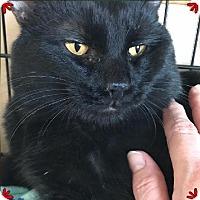 Adopt A Pet :: Sebastian - Glenwood, MN