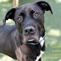Adopt A Pet :: Longjohns - Kansas City, MO