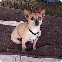 Adopt A Pet :: Mocha - Puyallup, WA