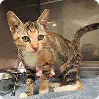 Adopt A Pet :: Ariel - Athens, GA