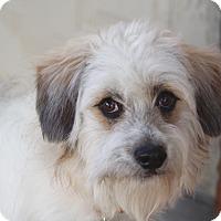 Adopt A Pet :: Fenway - Norwalk, CT