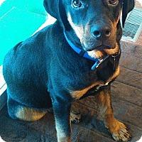 Adopt A Pet :: Ivan - Toledo, OH