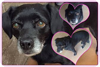 Terrier (Unknown Type, Small) Mix Dog for adoption in Transfer, Pennsylvania - Marcus
