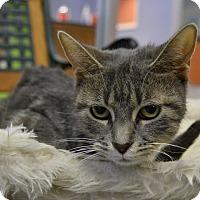 Adopt A Pet :: Fiona - Michigan City, IN