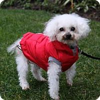 Adopt A Pet :: BURKE - Newport Beach, CA