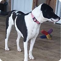 Adopt A Pet :: Emma - Spring, TX
