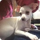 Adopt A Pet :: Ashley
