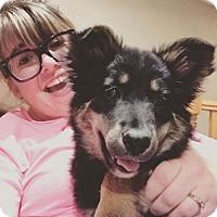 Adopt A Pet :: Leena *Multiple Applications* - Princeton, MN
