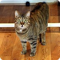 Adopt A Pet :: Cami - Gaithersburg, MD