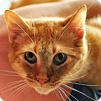 Adopt A Pet :: Lucky - Shreveport, LA