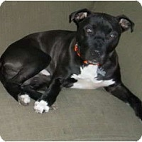 Adopt A Pet :: Piper - PENDING! - kennebunkport, ME