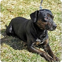 Adopt A Pet :: Rocko - ADOPTED - Indianapolis, IN