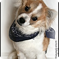 Adopt A Pet :: Franklin - Elmhurst, IL