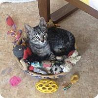 Adopt A Pet :: PORTIA - Ridgewood, NY