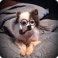 Adopt A Pet :: Poco - Homewood, AL