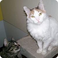 Adopt A Pet :: Tatiana - Scottsdale, AZ