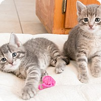Adopt A Pet :: Savanna and Samora - Chicago, IL