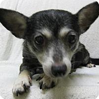 Adopt A Pet :: Ebony - Gary, IN