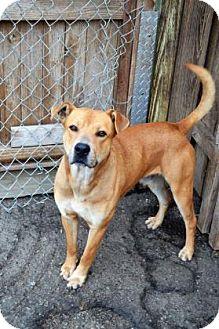 Rottweiler/German Shepherd Dog Mix Dog for adoption in Mission, Kansas - Roshuan
