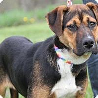 Adopt A Pet :: Harlow - Livonia, MI