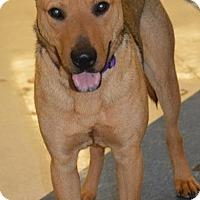 Adopt A Pet :: Rover - Munford, TN