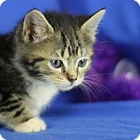 Adopt A Pet :: Gladys - Winston-Salem, NC