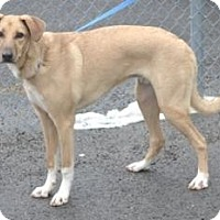 Adopt A Pet :: Tucker - Windsor Heights, WV