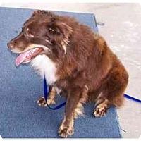 Adopt A Pet :: Trey - Orlando, FL