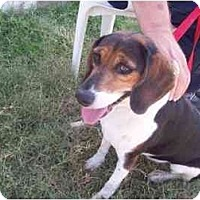 Adopt A Pet :: Maya Lisa - Phoenix, AZ
