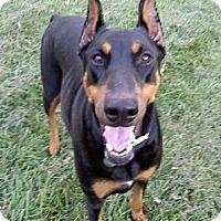 Adopt A Pet :: Bella--adopted!! - New Richmond, OH