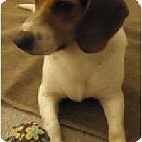 Adopt A Pet :: Laverne - Beachwood, OH