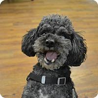 Adopt A Pet :: Hudson - Lake Odessa, MI