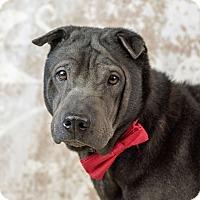 Adopt A Pet :: Joey - Holmes Beach, FL