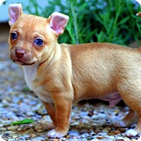 Adopt A Pet :: McClintock - Austin, TX