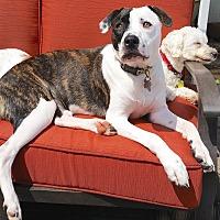 Adopt A Pet :: BUSTER - Linden, NJ