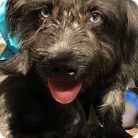Adopt A Pet :: Lady - Alpharetta, GA