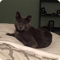 Adopt A Pet :: Star - Alexandria, VA