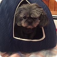 Adopt A Pet :: Pebbles - N. Babylon, NY