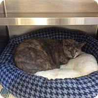 Adopt A Pet :: Poppy - Janesville, WI