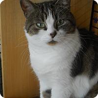 Adopt A Pet :: Twinkles - Wellesley, MA