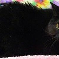 Adopt A Pet :: Ida - Columbus, NE