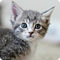 Adopt A Pet :: Quack 4 - Austin, TX