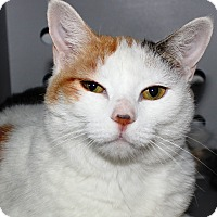 Adopt A Pet :: Tanana - Casa Grande, AZ